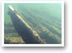 Harvey Bissell Shipwreck
